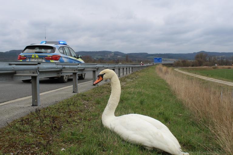 Vogelauffangstation Bayern